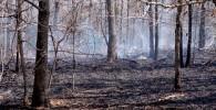 wildland-fire